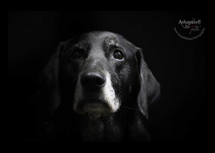 Older dog Bodhi stares deeply down the lens in this powerful photograph captured by Sarah Matula. Bodhi was from Danbury and has been adopted.  (Sarah Matula photo)