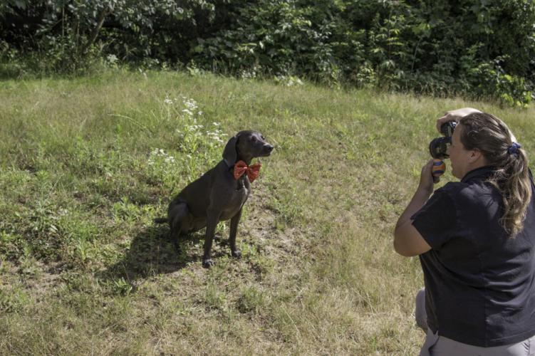 Local resident Sarah Matula volunteers her photography skills to help animal organizations.  (Sarah Matula photo)
