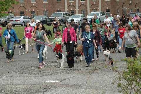 Nearly 200 dogs participated in a dog walk at the Fairfield Hills campus on Saturday, May 18, as part of the 4th Annual Strutt Your Mutt fundraising event.