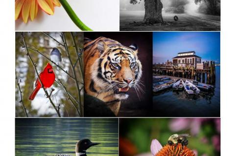 """A collage of images offers a look at some of the photographs that will be included in this year's """"Newtown & Beyond"""" exhibition, which will be on view at Newtown Municipal Center weekdays in November."""