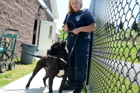 Animal Control Officer Carolee Mason steps outside on Thursday, May 16, with Madden, a dog up for adoption at the new Brian J. Silverlieb Animal Care and Control Center of Newtown.