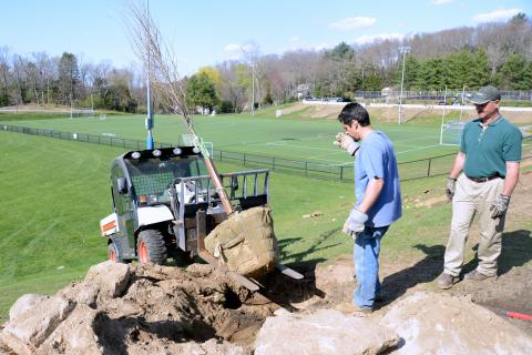 Volunteer Greg Fico guides bobcat driver Kyle Leonardi as he drops a tree in place. Mr Leonardi and Will Jacobs, right, with the Newtown Parks and Recreation Department, put trees in place the day before they were surrounded with top soil and watered in.