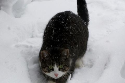 This snow-kitty came to us via Instagram.