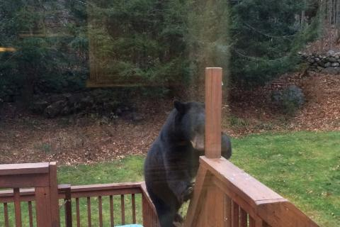 A bear tears into a suet feeder on Alpine Circle.
