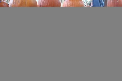 Ali Manfredi, a member of the Newtown High School JV soccer team, looks for a place to add a pumpkin to the rack for The Great Pumpkin Challenge. She and other members of the team showed up with 19 carved pumpkins Friday afternoon.