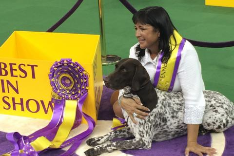 The German Shorthaired Pointer, GCH Vjk-Myst Garbonita's California Journey, and his owner, breeder and handler Valerie Nunes-Atkinson pose for photographers after winning Best in Show at the 140th Annual Westminster Kennel Club Dog Show. (Lisa…
