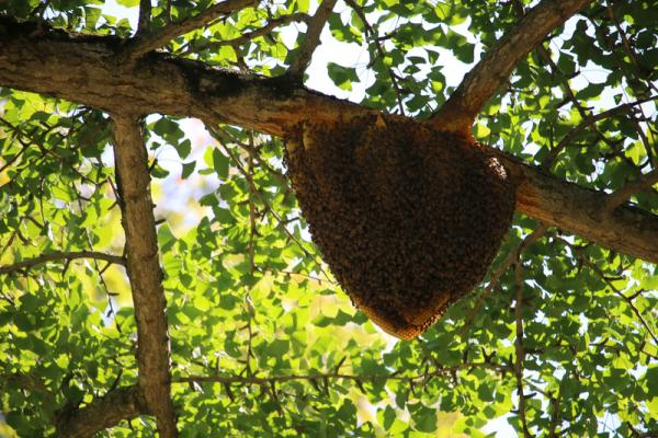 discovery of beehive sparks interest hudson valley 360