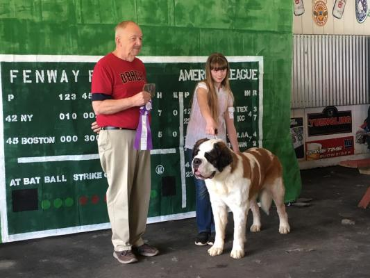 Saint Bernard dog show awards breed champs in East Durham