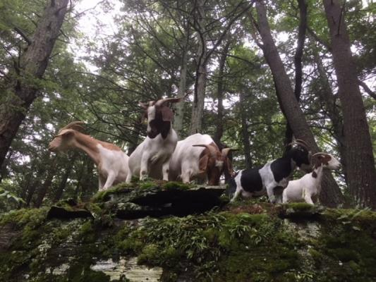 Catskill animal haven appeals for help | Hudson Valley 360
