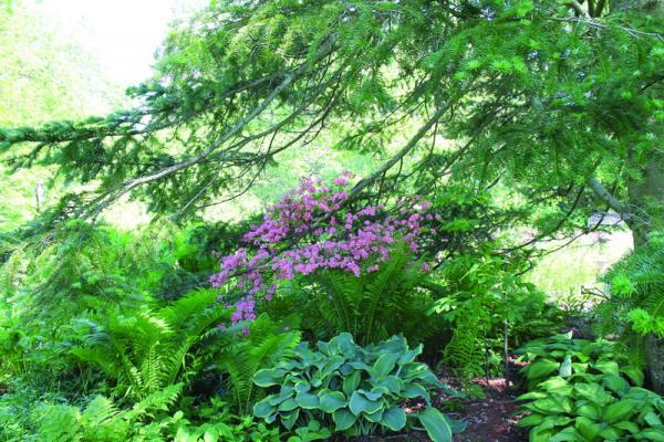 Berkshire Botanical Garden celebrates season | Hudson Valley 360