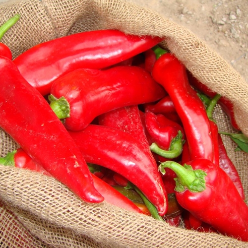 Congrats! You are a Red Chile!