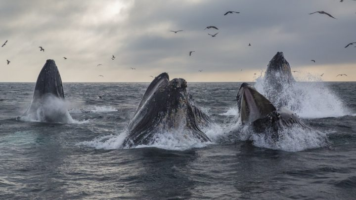 Scientists Are Using Satellite Technology to Track Whales from Space