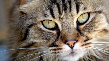 2 charged with gunning down the family cat in a backyard
