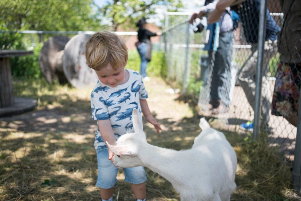 Things to do in NYC with Kids: Feeding baby goats