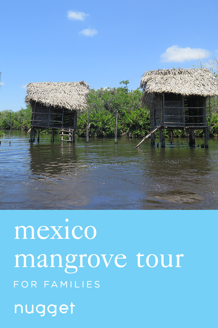 A Mexico Mangrove Tour: Crocodiles and Banana Bread
