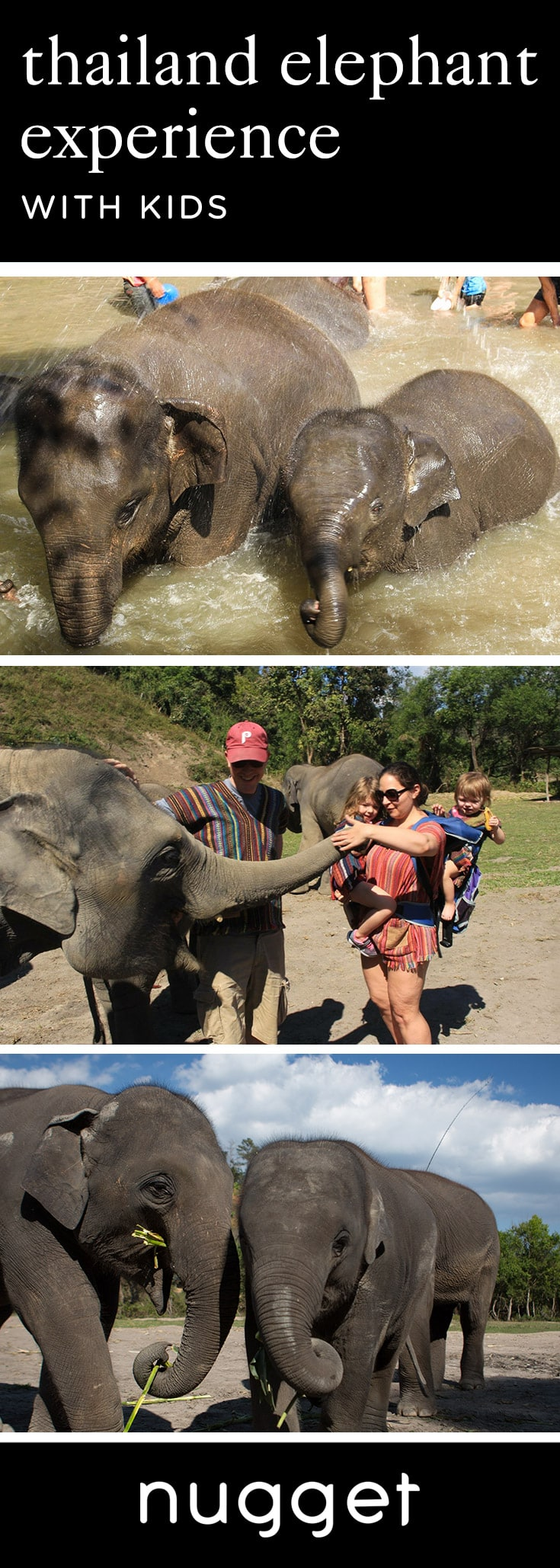 Chiang Mai: Elephant Jungle Sanctuary