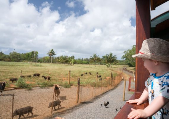 Kauai for Train Lovers