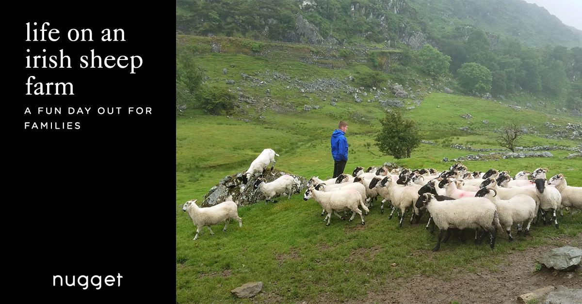 Life On An Irish Sheep Farm Kissane Sheep Farm Nugget