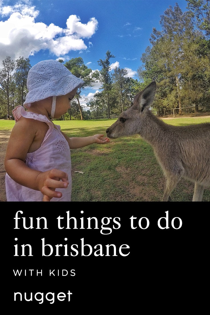 Sun, Sand, and Koalas in Brisbane