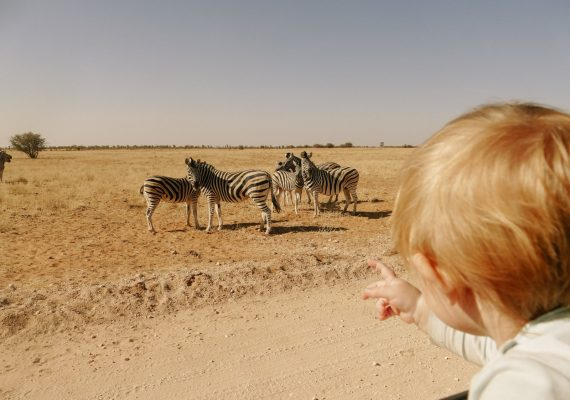 Etosha National Park: A Safari and Camping Adventure