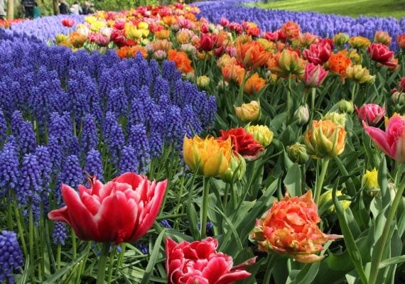 Flower Fun at Keukenhof Gardens and North Sea