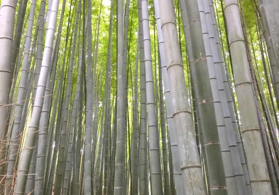 Arashiyama: A Bamboo Forest and Monkeys
