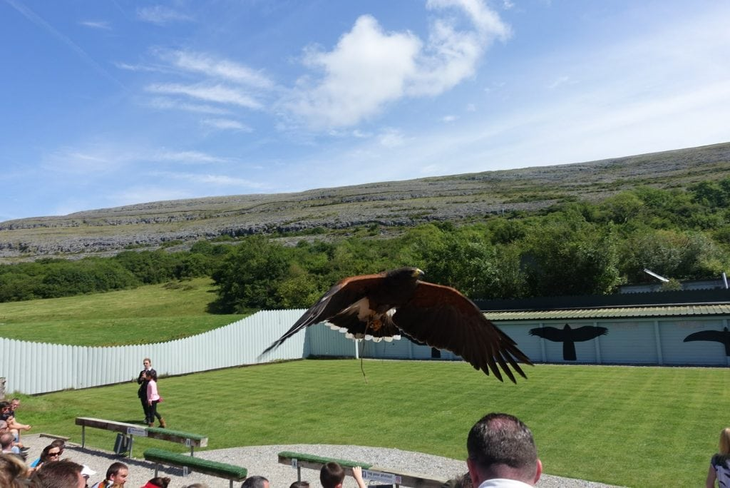 Aillwee Cave Bird of Prey Centre Aillwee Cave