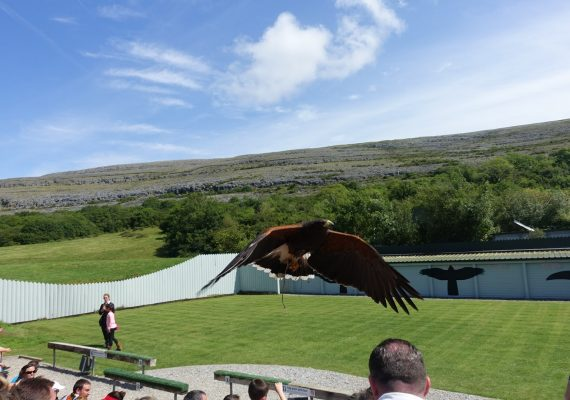 Aillwee Cave and Birds of Prey – The Beauty of The Burren