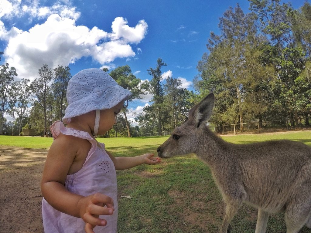 Lone Pine Koala Sanctuary Fun things for kids to do in brisbane
