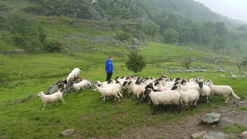 Kissane Sheep Farm Things to do in Ireland for kids
