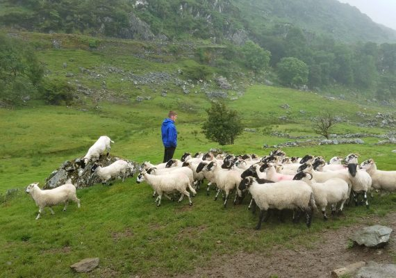 Life on an Irish Sheep Farm