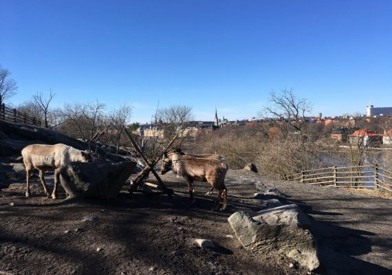 Skansen: Discover Swedish Nature and Culture