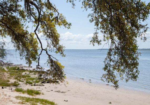 Cumberland Island: Wild Horses and Serene Beaches