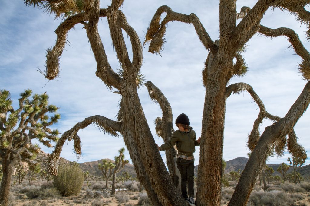 best national parks for kids: Boy climbing in Joshua Tree National Park