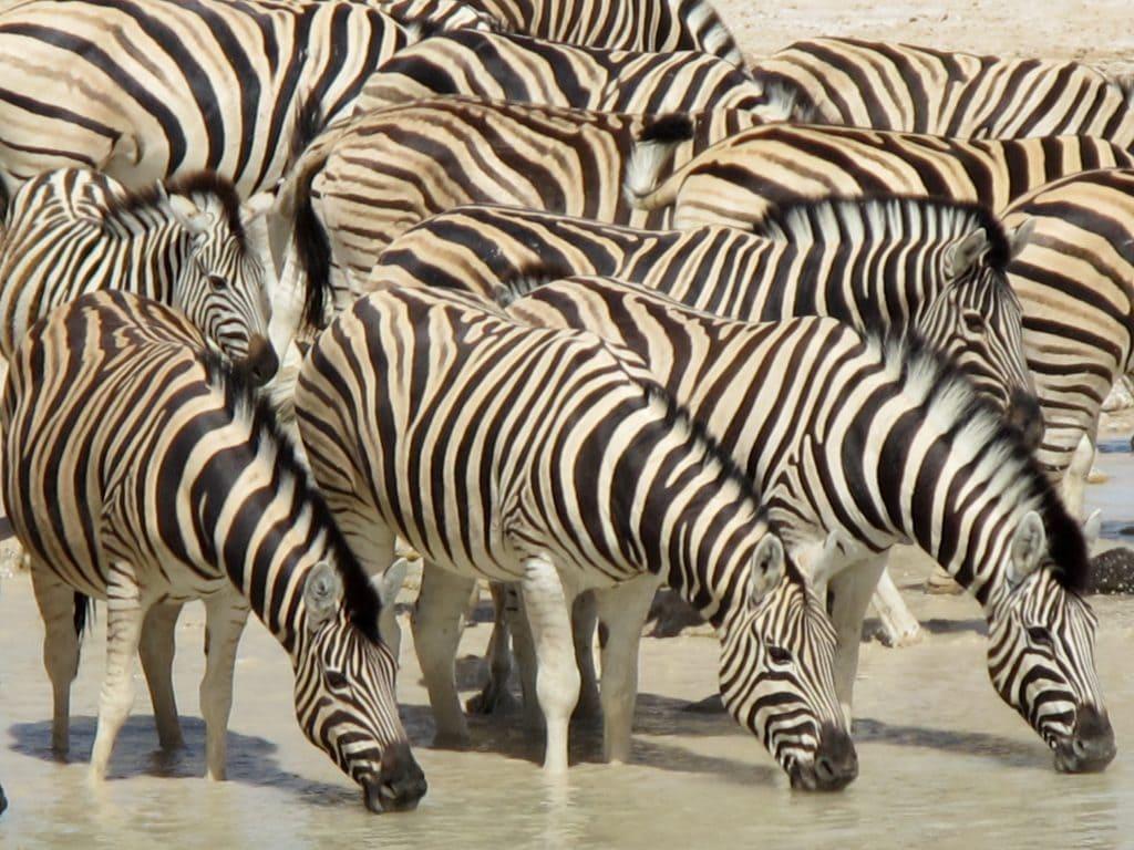 African Safari Holidays: Etosha with Kids