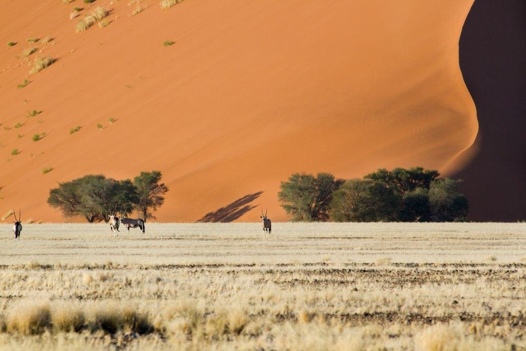 Africa for Kids: Oryx in Namib Desert