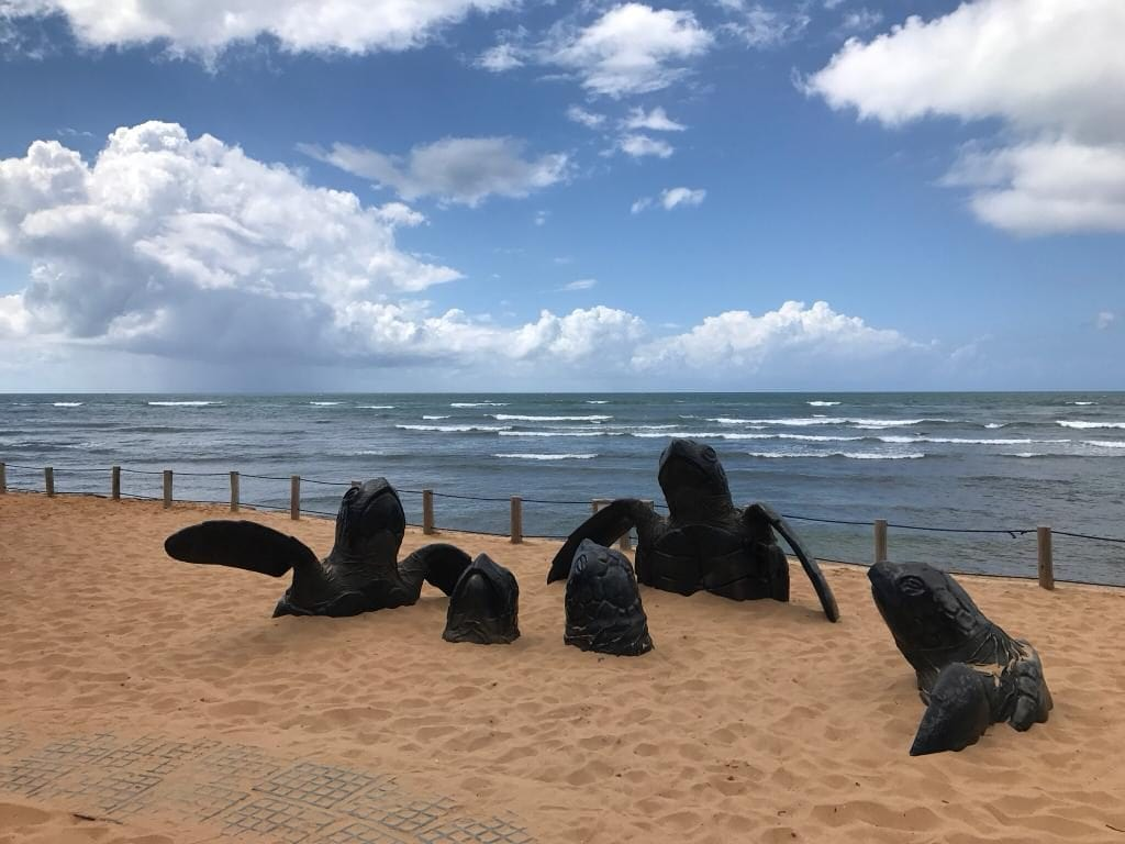 Brazil for Kids: Sculptures of turtles at Projeto Tamar