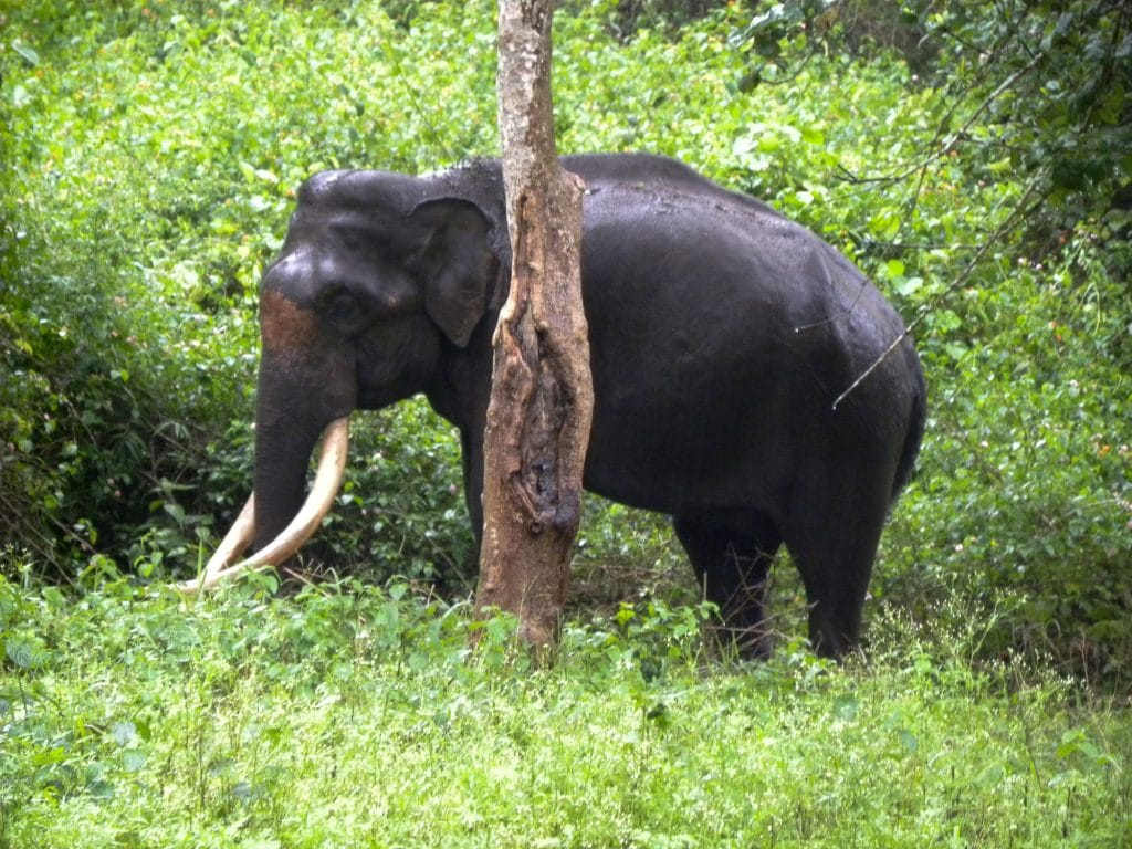 India for kids: an elephant at Bandipur