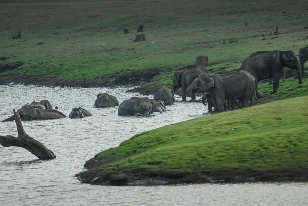 India for kids: herd of elephants