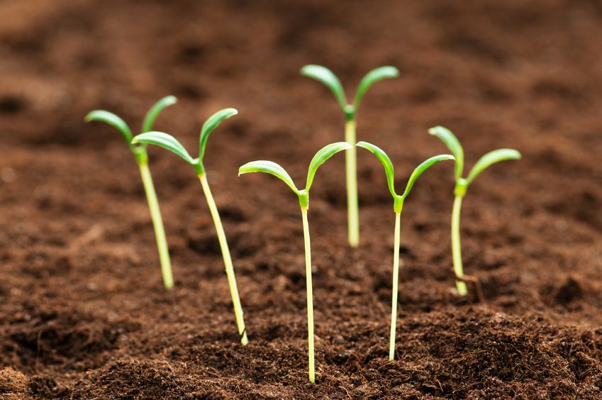 Benefits Of Sprouting Nutrition Tribune