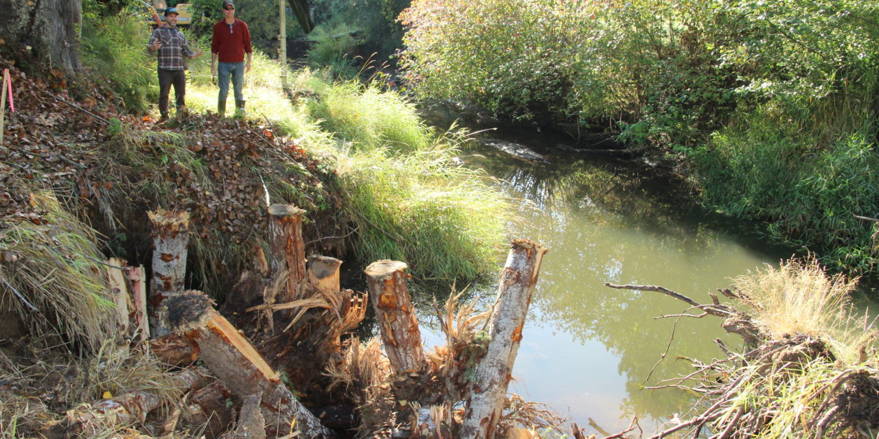 Squaxin Island Tribe repairs Skookum Creek for salmon