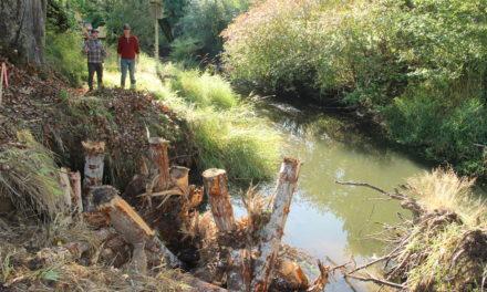 Squaxin Island Tribe repairs Skookum Creek for salmon