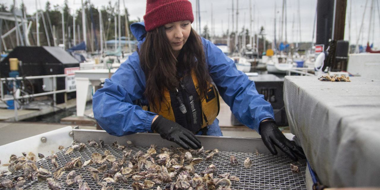 Port Gamble S'Klallam Program to Increase Shellfish Harvest for Tribal Members