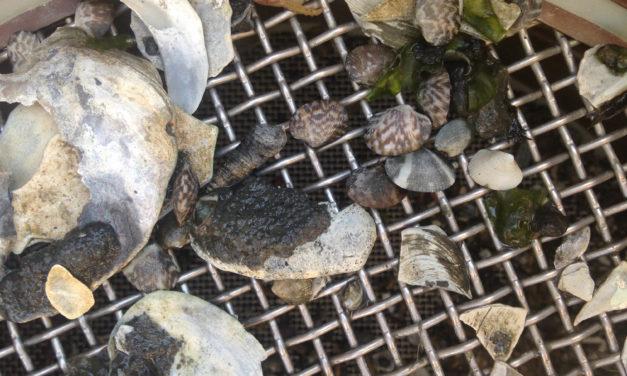 Swinomish Tribe seeks to help shellfish adapt to climate change
