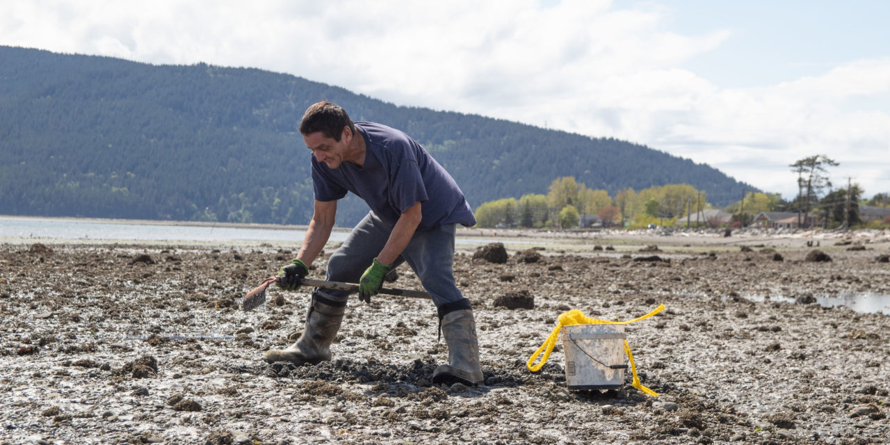 Lummi Nation reopens spring clam harvest in Portage Bay