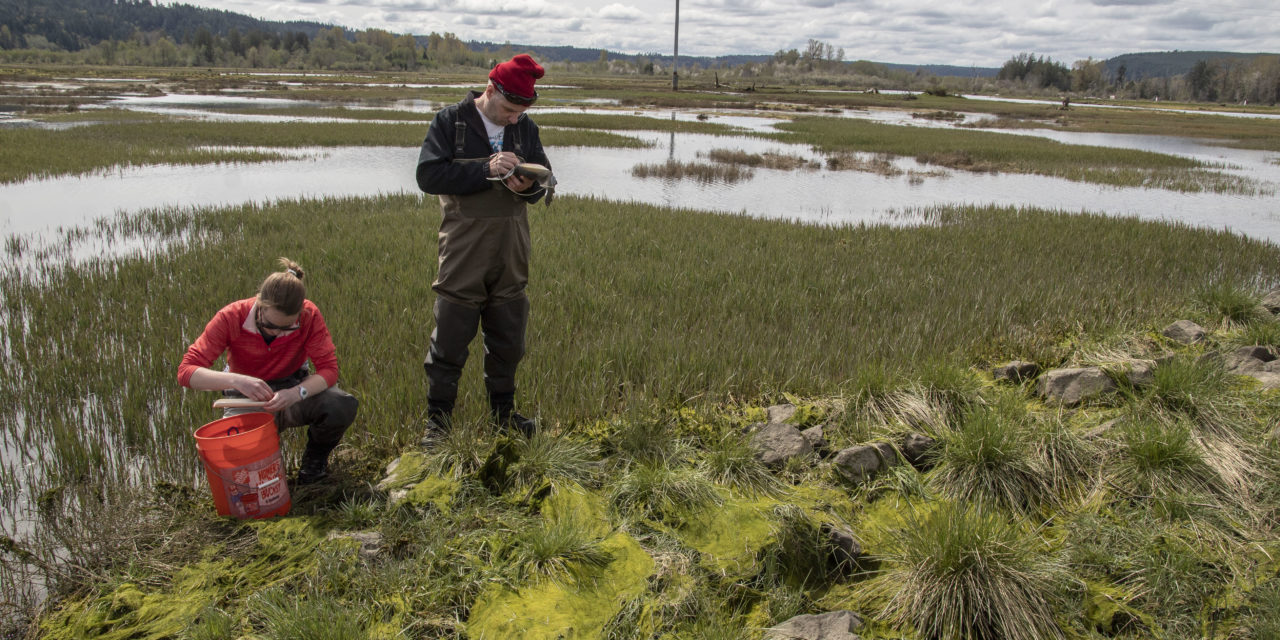 Fish, Plants Thrive in Restored Skokomish Estuary