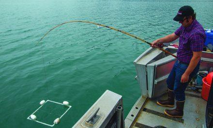 Skokomish Tribe investigates impacts on shellfish from blue-hued Hood Canal