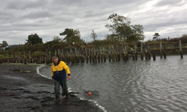 Early monitoring detects invasive European green crab on Lummi beaches