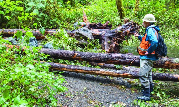 Lower Elwha Klallam Tribe enhances Olympic Peninsula streams with logs and rocks for salmon, lamprey habitat