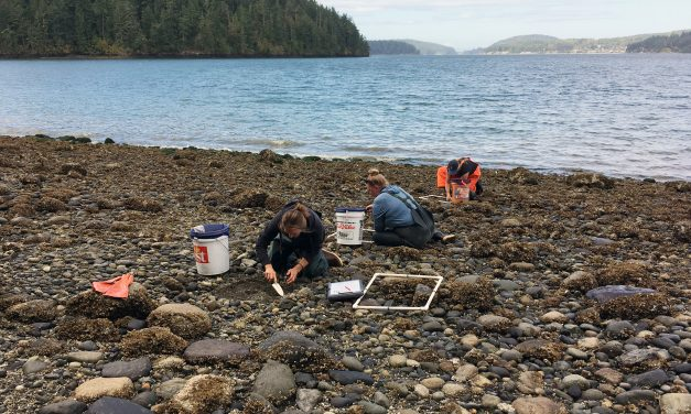 Swinomish Revives Ancient Clam Gardens to Fight Climate Change